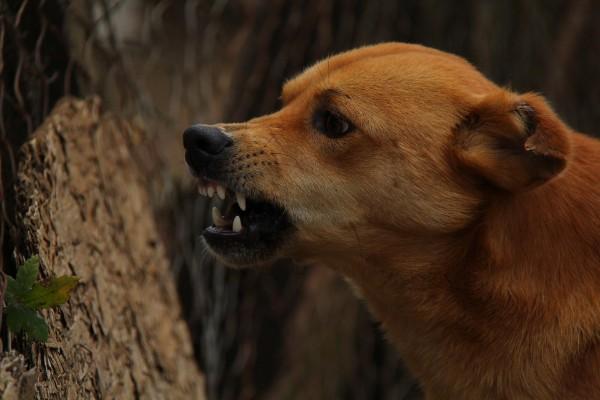 perro_rabia_enfermedad_humanos_vacunas_dia_mundial