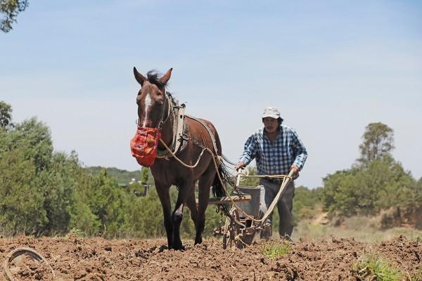 LOS DAÑOS. Recientemente, la Sader advirtió que mil 955 municipios reportan algún grado de sequía. Foto: Cuartoscuro