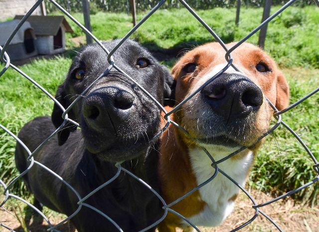 Perros comen mejor debido a la crisis