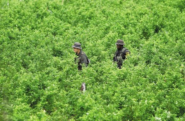 HALLAZGO. El Ejército localizó un laboratorio y plantío de coca en Izabal. Foto: AP