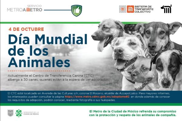 perros_stc_metro_adopcion_CDMX
