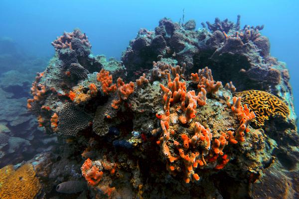 Norma Angélica Corado afirmó que hay Síndrome Blanco en los arrecifes de Cozumel
