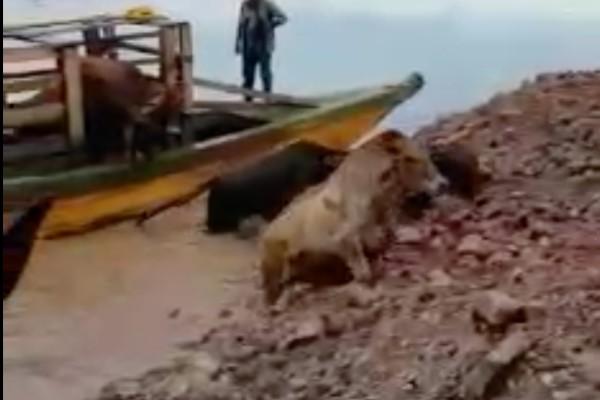 ganado_ilegal_animales_productores_Siniiga_cnog