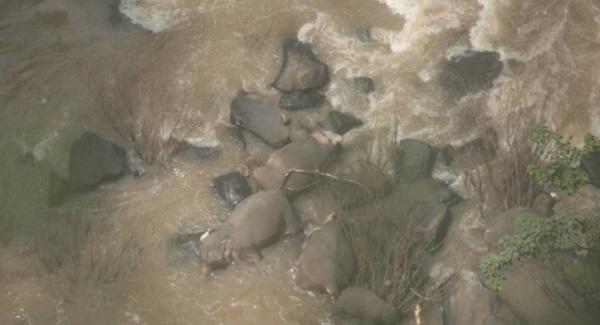 Estos animales actualmente se encuentran en peligro de extinción. Foto: Especial