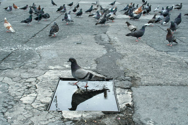 palomas raptadas en cdmx GAM