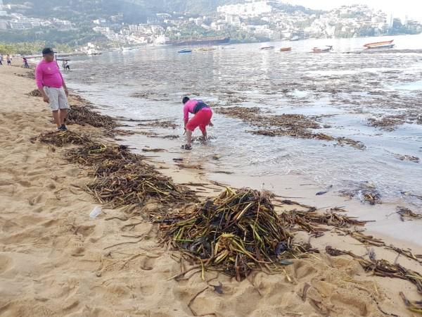 El lirio fue retirado con la finalidad de cuidar la imagen del puerto y mantener limpia la bahía. Foto: Especial