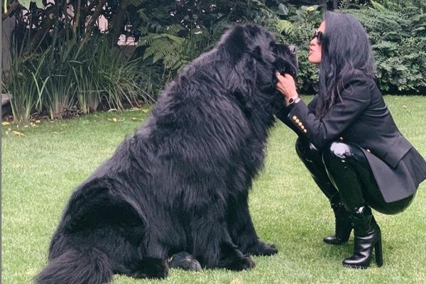Martha Debayle anunció el fallecimiento de su perrito. Instagram: Martha Debayle