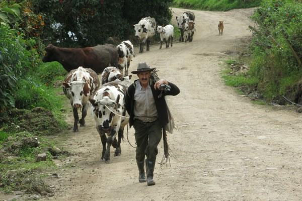 El secretario de Agricultura prometió el uso de la Guardia Nacional para frenar el problema. Foto: Especial