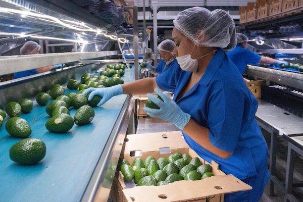 Superavit agroindustrial agropecuaria mexico sader