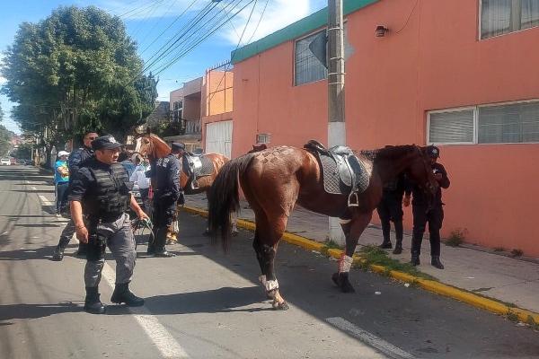 maltrato_animal_caballos_nuevo_leon
