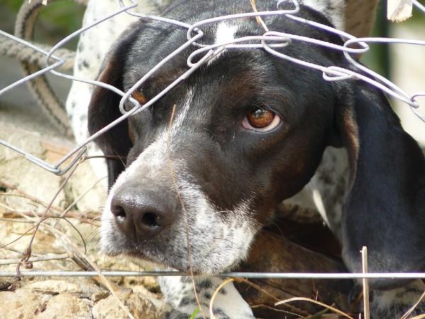 Con esta iniciativa se busca sancionar la crueldad y el maltrato animal. Foto: Pixabay