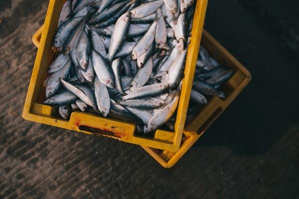 Se estima que en México el 30 por ciento de la producción nacional de frutos del mar es ilegal. Foto: Pixabay