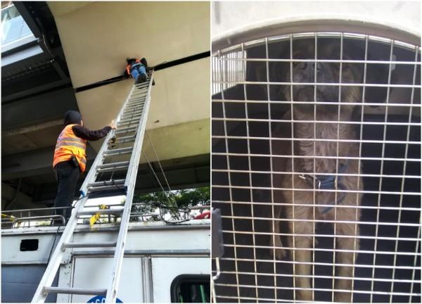 El can llevaba cuatro días atrapado. Foto: Especial