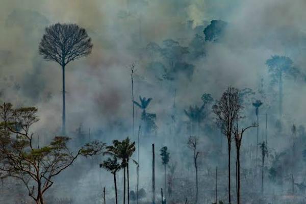 """Miles de científicos alertan a la población mundial por """"emergencia climática"""""""