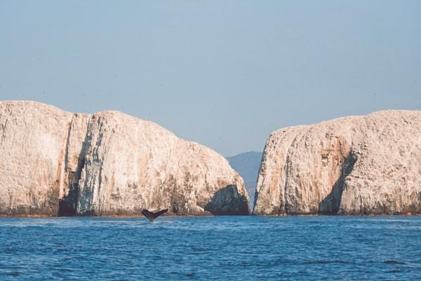 PATRIMONIO. Este destino cuenta con una gran riqueza submarina del Pacífico mexicano. Foto: Especial