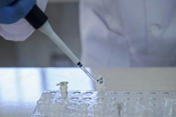 ciencia_virus_elimina_cancer_ratones