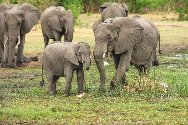 elefante_zimbaue_sequia