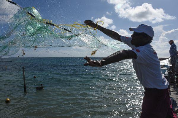 ACTIVIDADES. En México se pescan cerca de 1.8 millones de toneladas de especies del mar. Foto: CUARTOSCURO