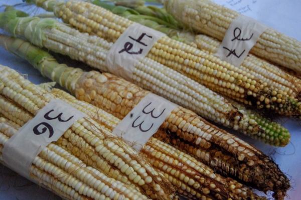 Imagen ilustrativa FOTO: SADER / CUARTOSCURO.COM