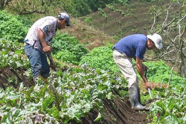Los productores del campo recibirán apoyos vía el programa social Sembrando Vida. Foto: Especial