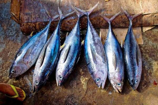 Grupo Mar es la primera compañía del sector pesquero que se suma a estas prácticas establecidas por la ONU. Foto: Pixabay