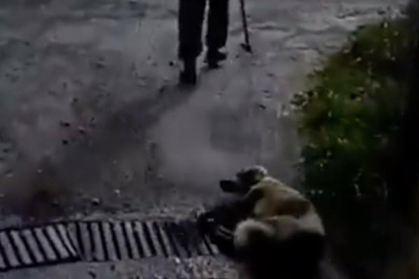 maltrato_animal_perro_españa