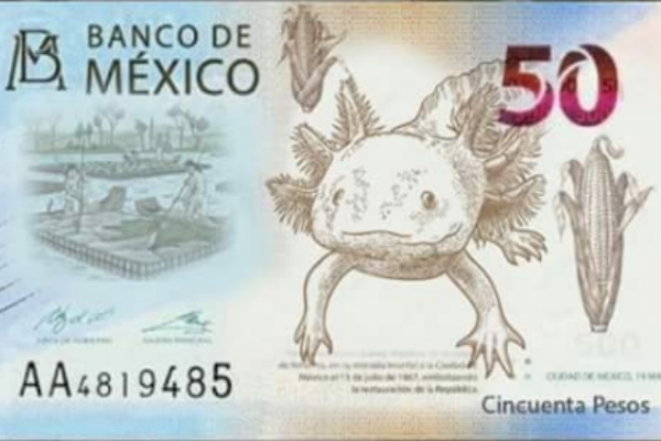 billeto 50 pesos ajolote