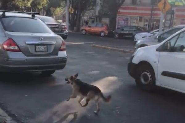 perro abandonado coyoacan video
