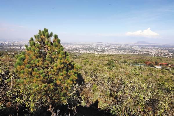 Parque_San_Andrés_Totoltepec