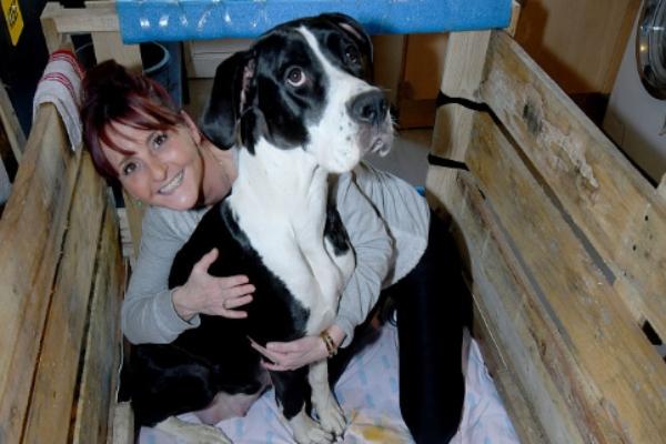 Joanne_Hine_Reino_Unido_21_cachorros