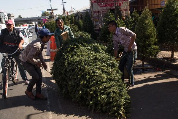 Arboles de navidad-navidad-Mercado-Jamaica-Navidad-Consumo-Árboles