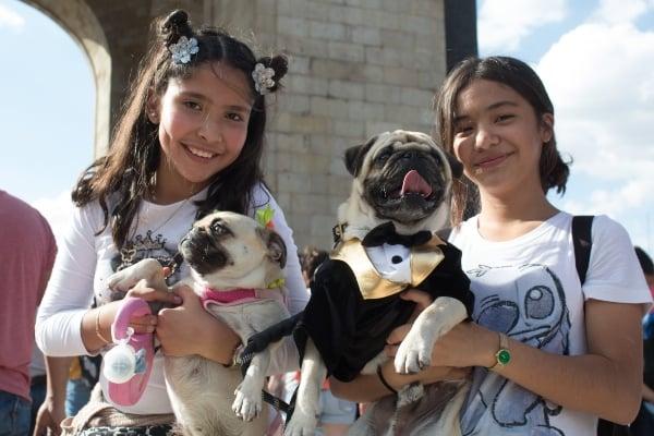 influenza-canina-virus-mortal-mascotas-humanas