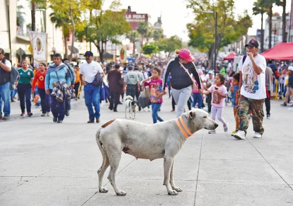 CÍCLICO. Desde el Congreso se exigió crear una campaña para concientizar a los peregrinos. Fotos: Daniel Ojeda