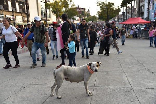 La alcaldía lanzó una campaña para que los peregrinos no abandonen a sus perritos. Foto: Daniel Ojeda