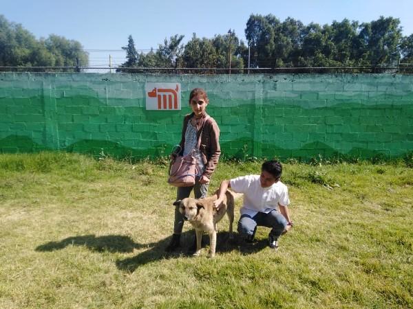metro-centro-transferencia-canina-adopciones-perros-canes
