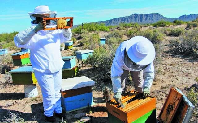 PROTECCIÓN. Sonia Esparza trabaja desde hace tres años en el cuidado de los apiarios, en Samalayuca. Foto: Hérika Martínez
