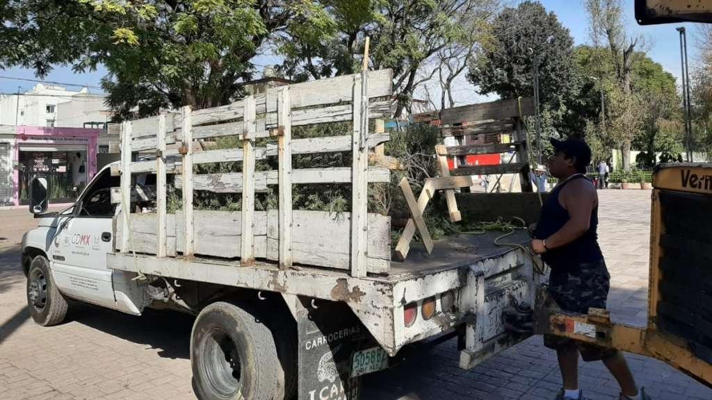 arboles-navidad-recoleccion-xochimilco