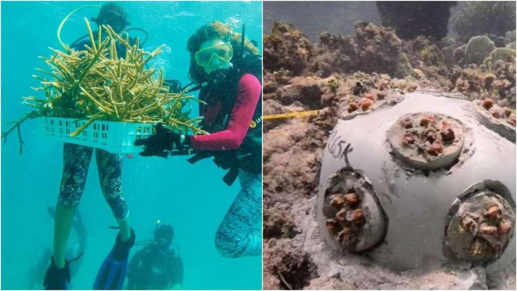 quintana-roo-arrecifes-corales-coral-siembra-proyecto-inapesca