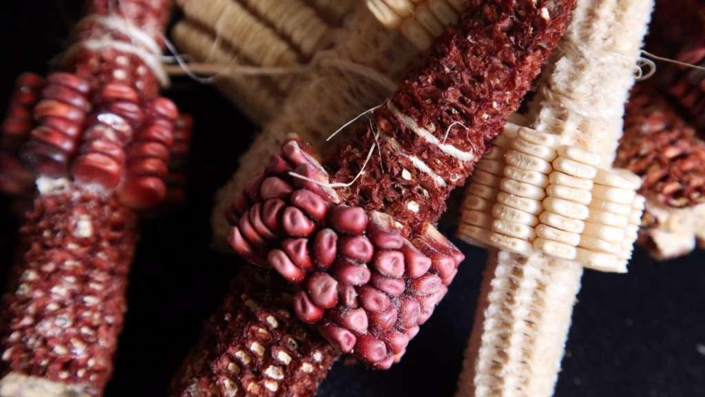 Mexicanos llevan proyecto con maíz al Foro Económico Mundial.