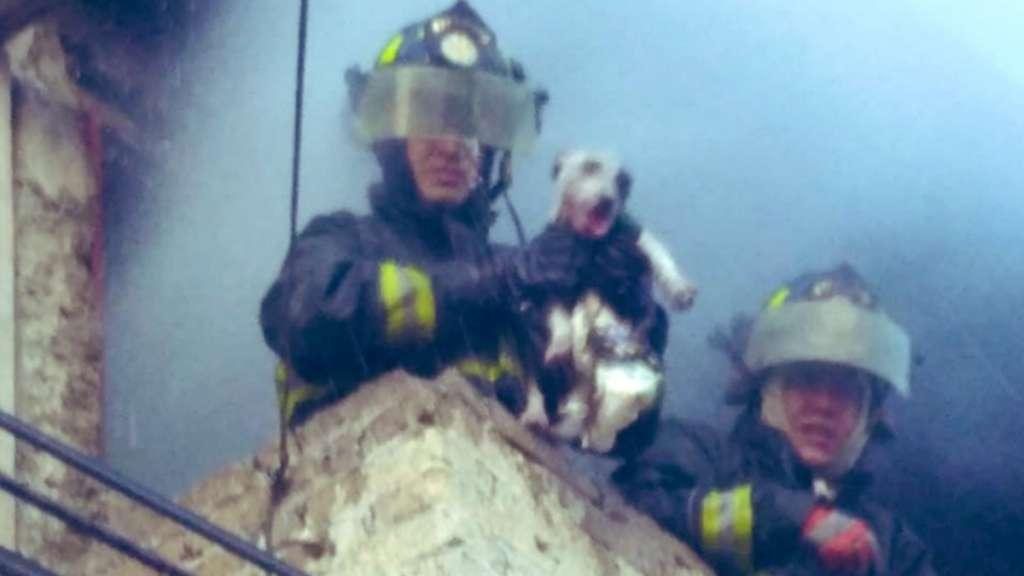 perrito rescatado incendio GAM bomberos CDMX