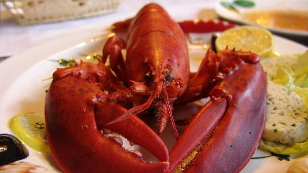 langosta-como-preparala-tips-cocinar-comida