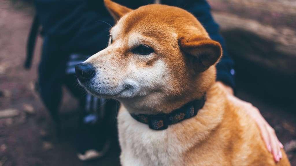 perrito-vigila-dueña-hacer-tarea-video