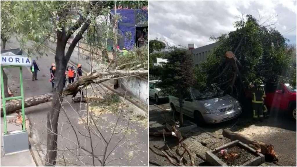 fuertes-vientos-ciudad-mexico-caida-arboles-tren-lijero-doctores-alerta-proteccion-civil-bomberos
