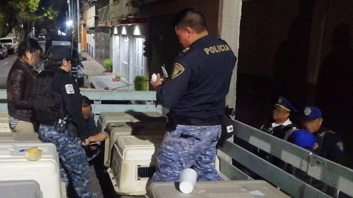 rescate-perros-nuevo-vallejo-enjaulados-cachorros-gustavoa-madero-alcaldia-detenido