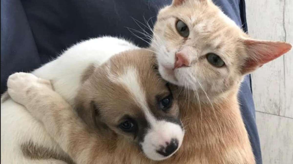video gatita adopta amamanta cachorritos abandonados