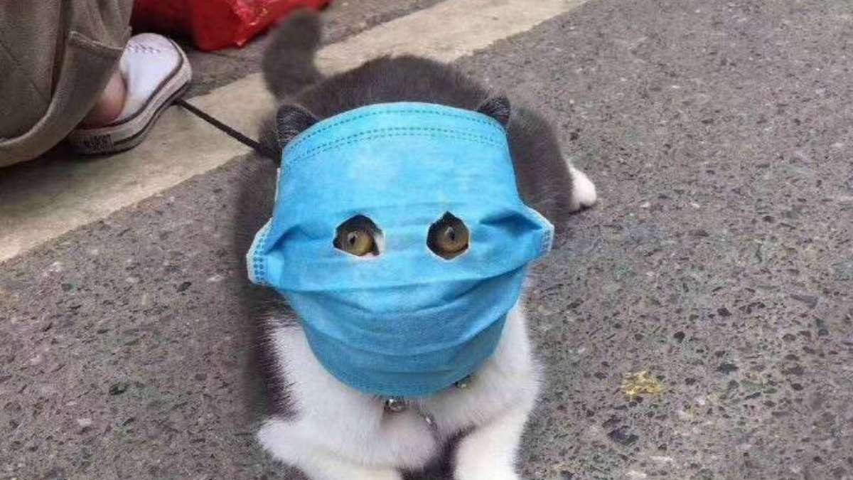 gato coronavirus animales china enfermedad