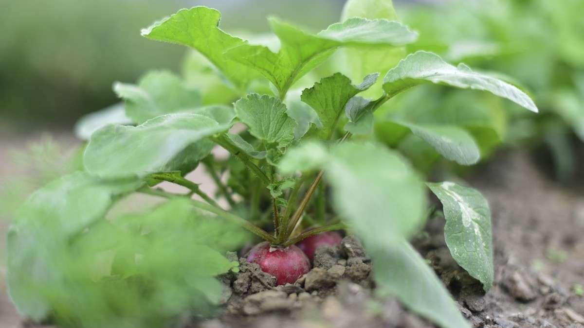 Dietas-sustentables-50-alimentos-futuro-alimentacion-sostenible-ingredientes