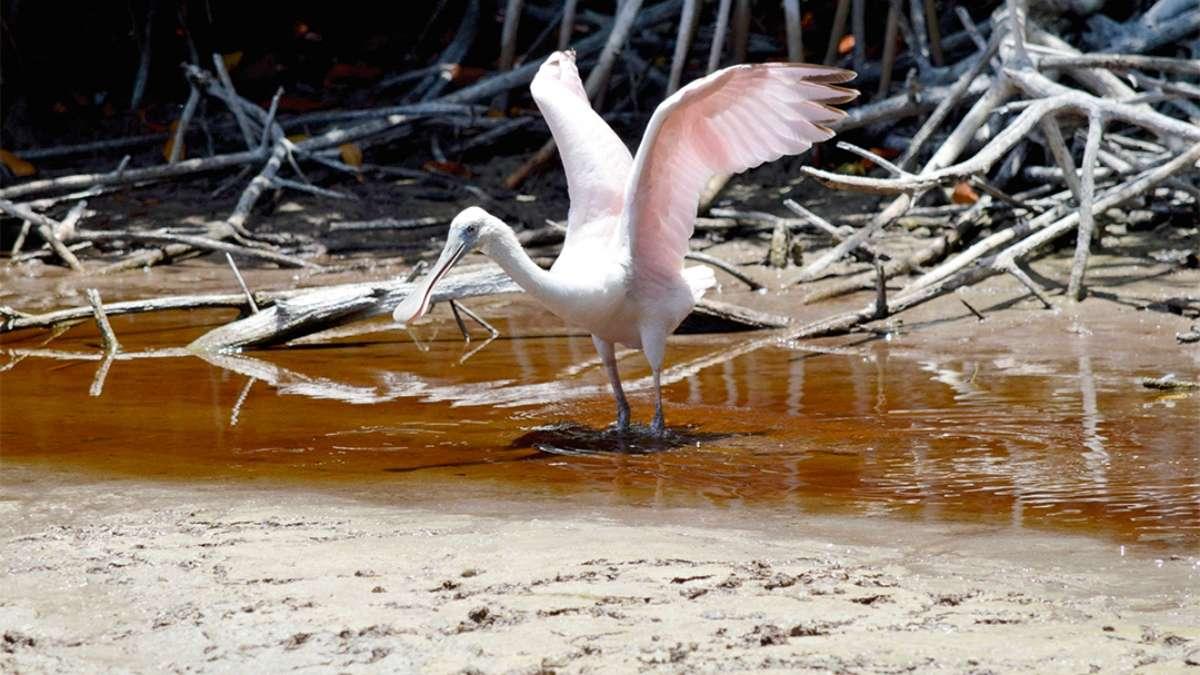 Flamingo Calor Sequia