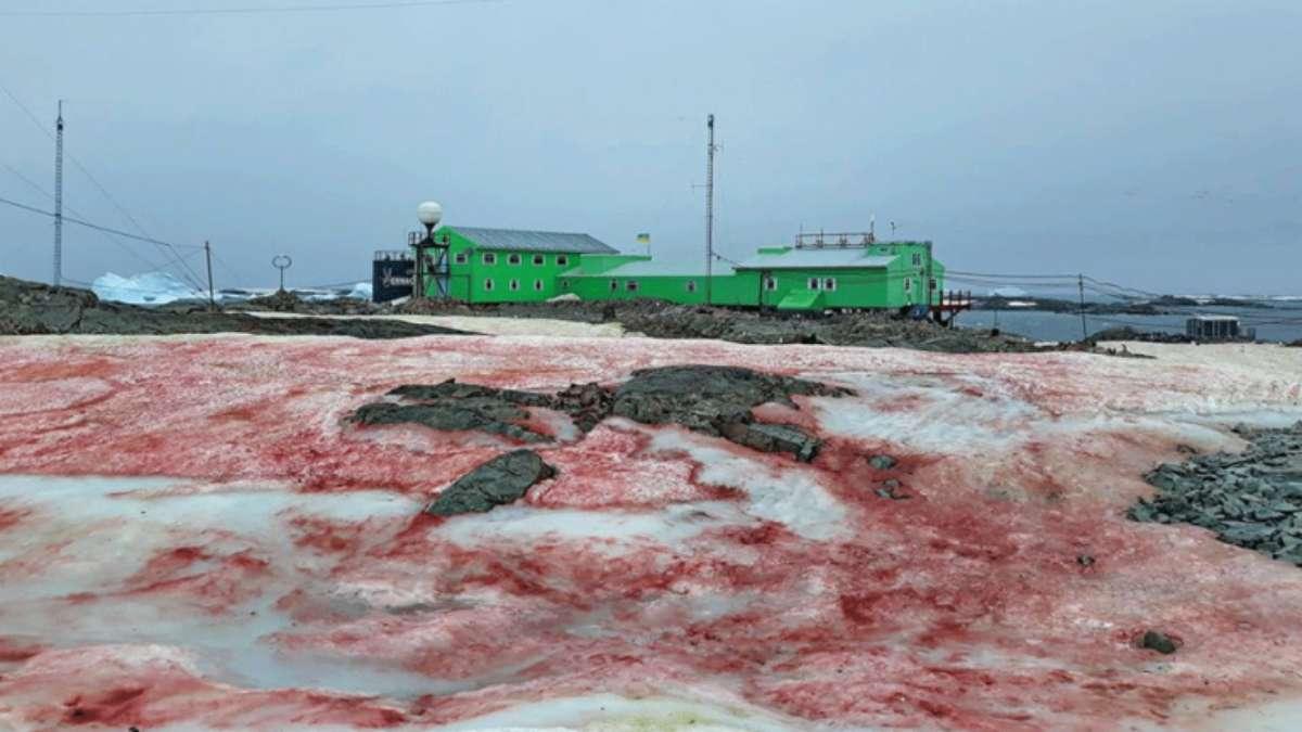 nievo sangre antartida