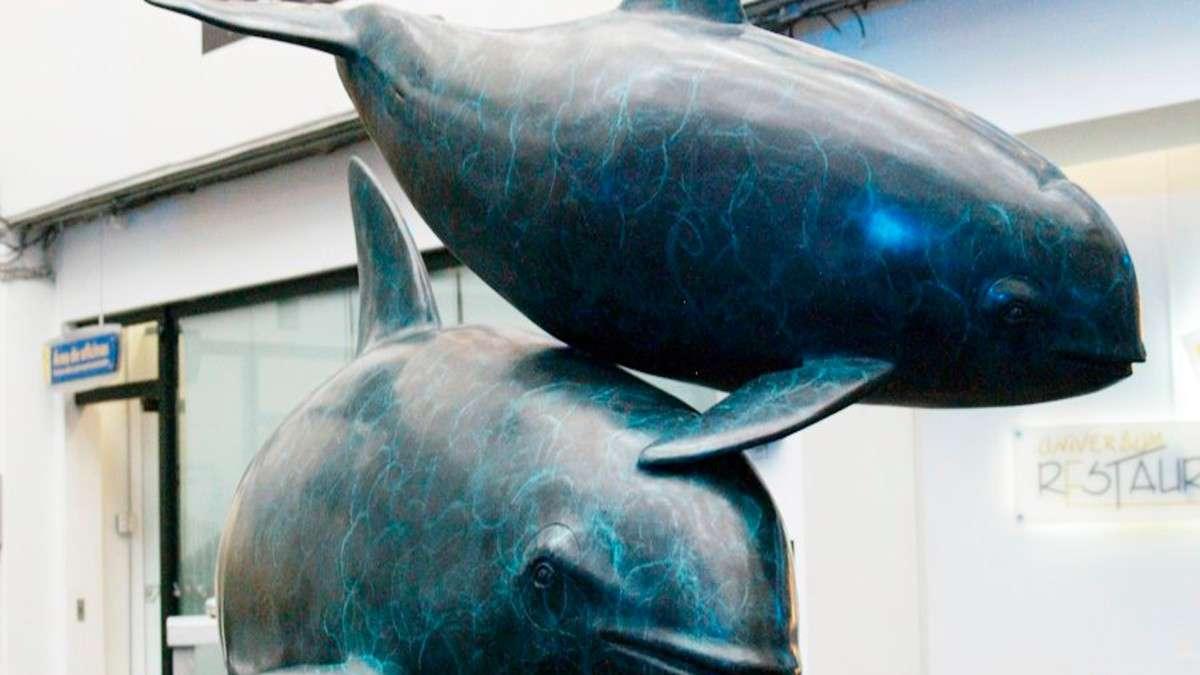 vaquita marina exposicion cdmx baja california sur